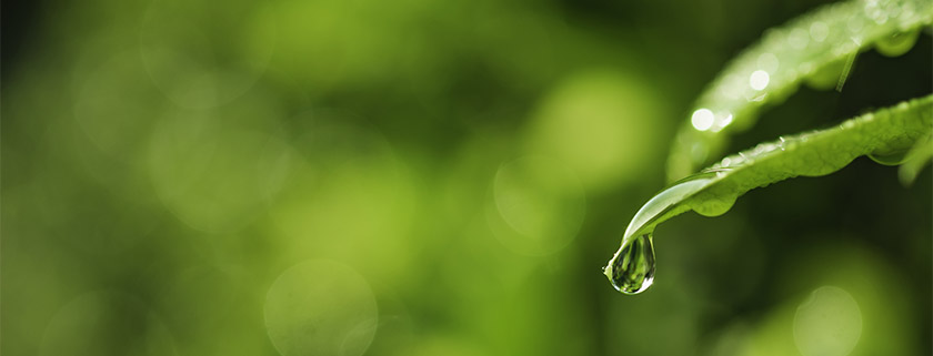 Water droplets or dew drops on leaves in the morning in nature background.